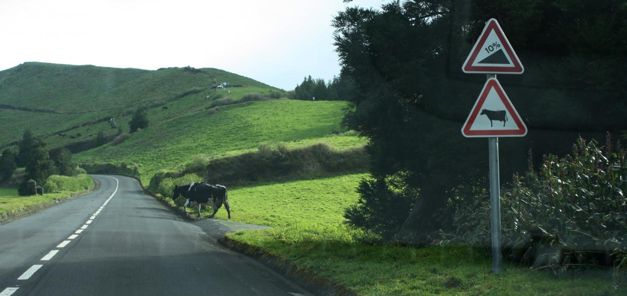Hills and cows. Certainly there are similarities between the signs and reality.